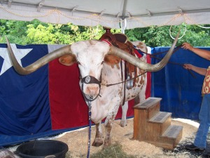Sancho, the 1-ton steer with 10-foot-long horns stands ready to test the courage of guests at Empire's open house.